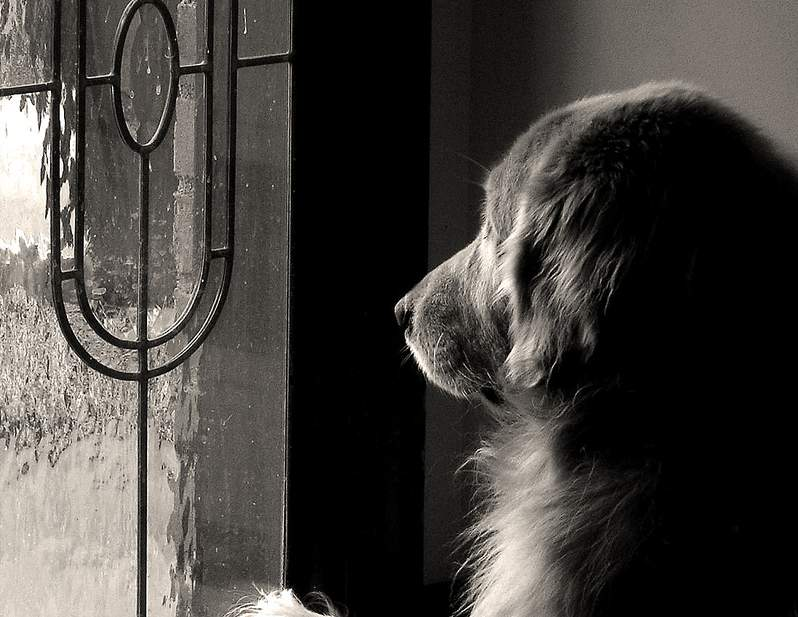 dog waiting for parents arrival
