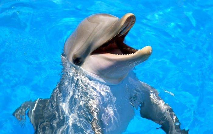 swim_with_the_dolphins