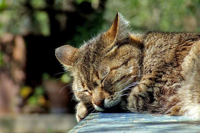 A part of me wishes to become a rich person's cat in my next life...so I can sleep whenever I want.